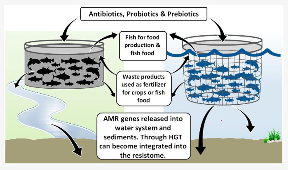 Movement of Antimicrobials in Aquaculture (graphic source: Watts et. al., 2017)