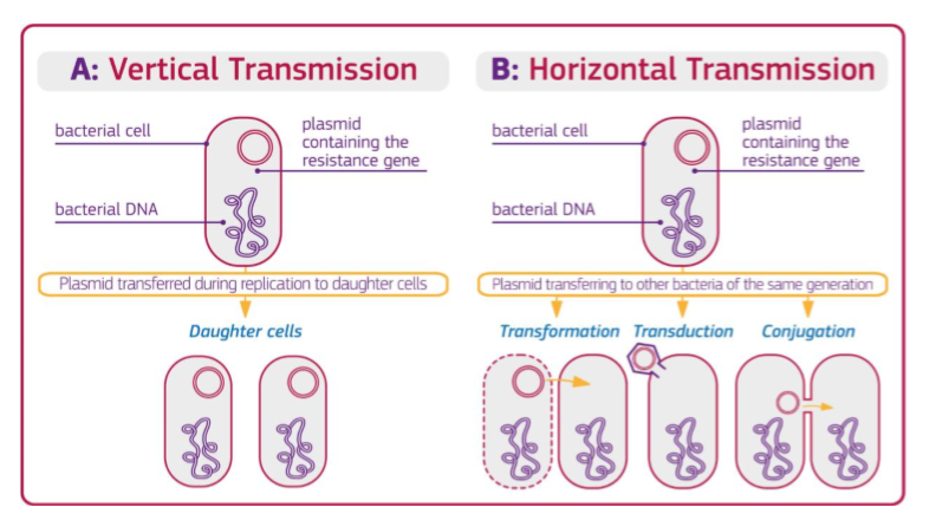 Vertical and horizontal transmission of resistance in bacteria (graphic source: Sonseverino et. al., 2018)