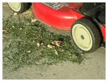 lawn clippings photo