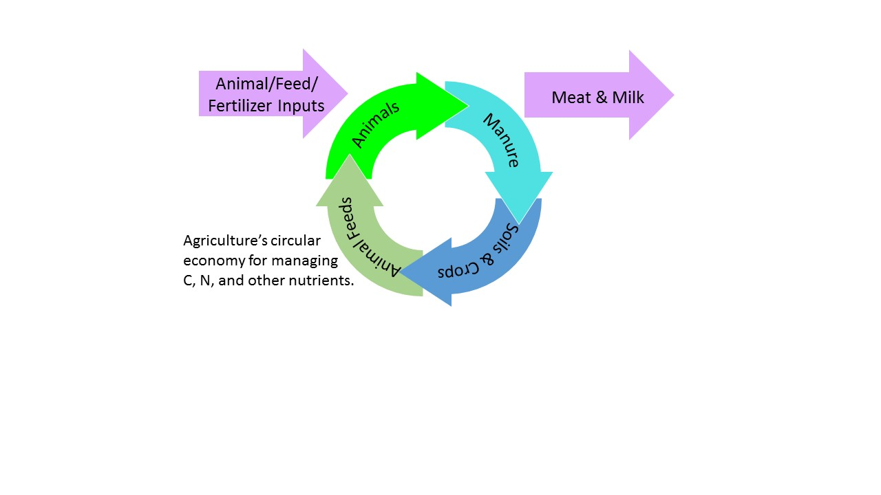 Visual illustrating agriculture's circular economy for managing C, N, and other nutrients.