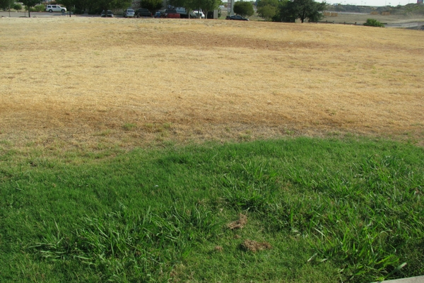 Drought in a lawn