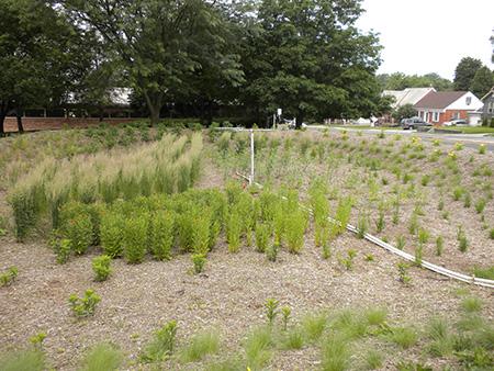 Example of a bioretention garden