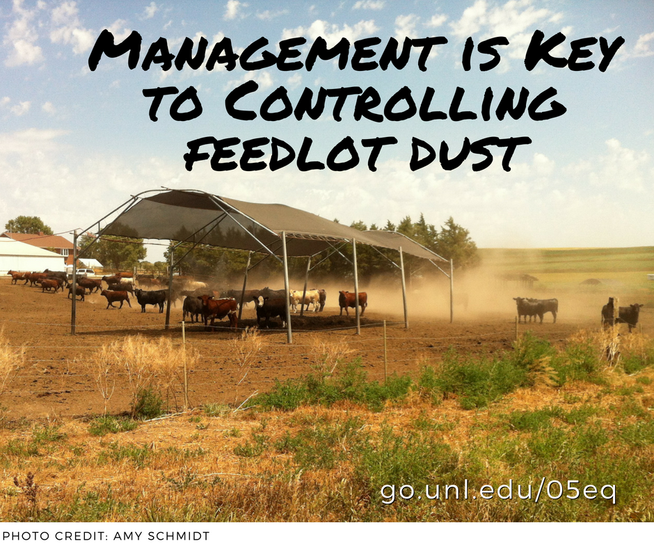 management is key to controlling feedlot dust