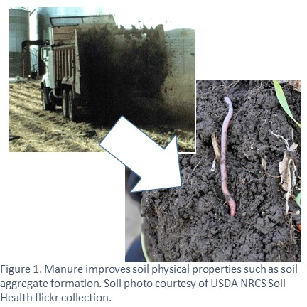 The organic matter in manure improves soil quality including formation of stable soil aggregates.