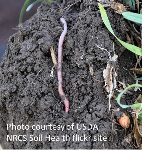 Soil Aggregate