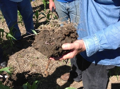 clump of soil showing organic matter
