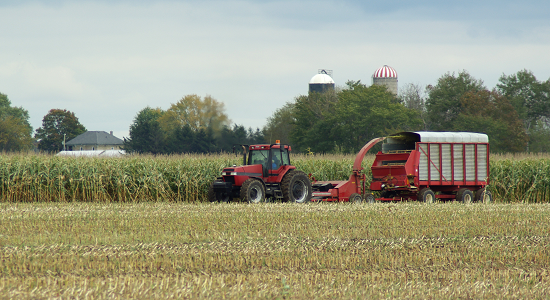 photo of corn silage harvest