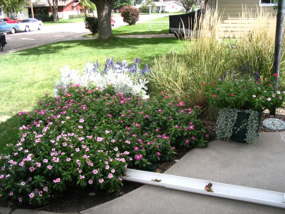 downspout redirection into a flower garden
