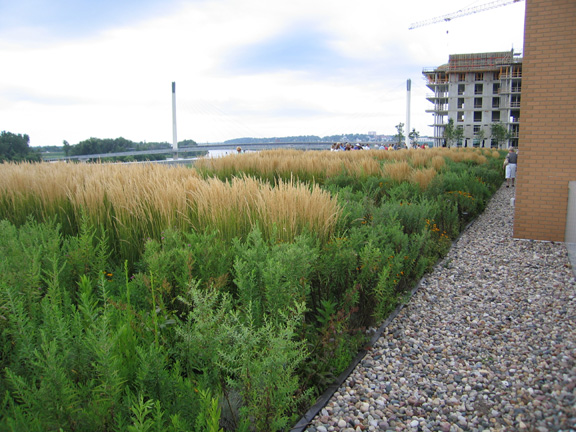 A green roof