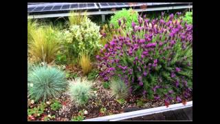 Green Roof Video Thumbnail