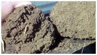 No-till soil clod on the left, tilled soil clod on the right