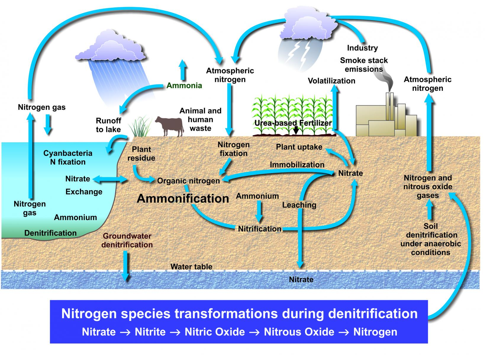 Generalized nitrogen cycle within water, soil and in the air.