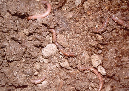 Long-term studies have shown that manure application can reverse the decline in organic matter.