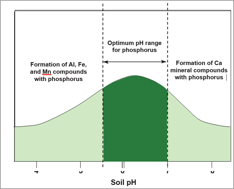 Soil phosphorus as affected by soil pH.