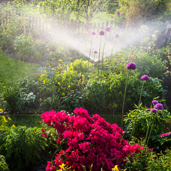 Garden with a sprinkler going