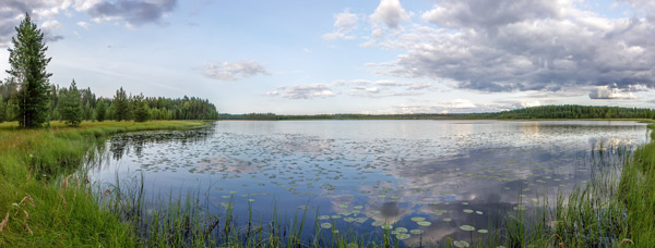 Panorama of a lake with lilypads