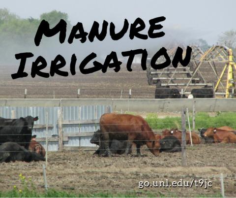 irrigating manure behind feedlot
