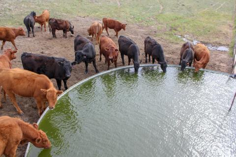 Being able to quickly identify if a problem is occurring with a water source gives producers the opportunity to respond rapidly to correct any issues. Photo credit Troy Walz.
