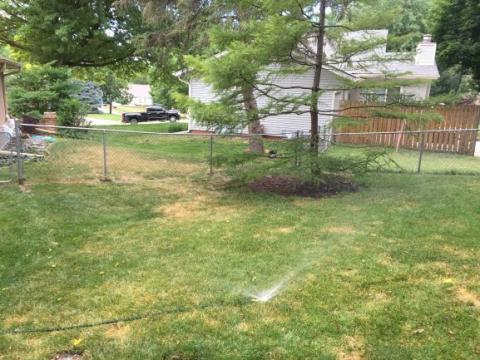 Irrigating lawn with a sprinkler